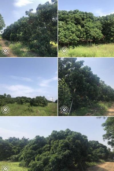 ไร่สวน 2500000 จันทบุรี สอยดาว ปะตง